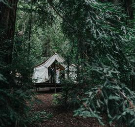 Pohled skrz stromy na svatbu v lese